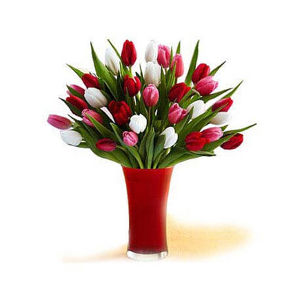 30 Red White Pink Tulips In A Glass: Tulip Flowers